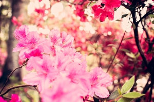 2015_04AprMaternity (12 of 1)