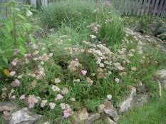 ugly flower garden!